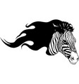 black silhouette zebra head with flames vector image