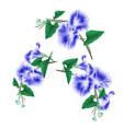 morning glory blue spring flowers set vintage vector image