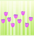 pink tulips in row vector image