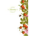 rose hip vertical banner vector image vector image