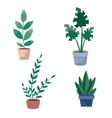 set indoor plants in brown pots isolated vector image vector image