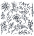 Collection of hand drawn spring flowers and plants