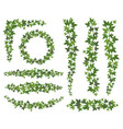 green ivy leaves on hanging creepers branches vector image vector image