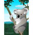 Koala sitting in a gum tree in Australia vector image vector image