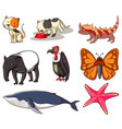 large set wildlife with many types animals vector image