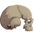 skull in profile vector image