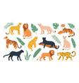 big feline family animals tiger lion cheetah vector image