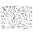 hand drawn bakery doodle bread sketch wheat vector image vector image
