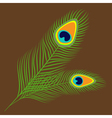 Peacock two feather set collection Exotic tropical vector image vector image