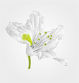 Rhododendron Mountain spring shrub white flower vector image vector image