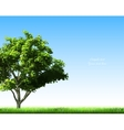 Summer background with grass and tree vector image vector image