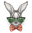 rabbit in glasses sketch portrait vector image