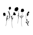 set of poppies silhoutte vector image