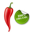 chilli pepper with label vector image vector image