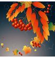 dark berries vector image vector image