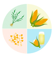 The Process of Corn Production in Pie Chart vector image vector image