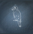 amazon parrot icon sketch on chalkboard vector image vector image