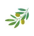 cartoon green branch with olives and foliage in vector image vector image