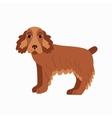 Flat cocker spaniel pet vector image