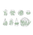set of simple geometric terrariums with plants vector image vector image