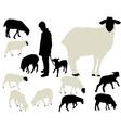 sheep vs vector image