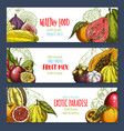 banners of tropical exotic fruits harvest vector image vector image