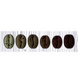 coffee beans realistic set showing various stages vector image