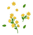 green branch with small yellow flowers and leaves vector image vector image