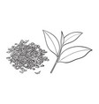 hand drawn pile of dry tea and fresh leaf vector image vector image