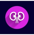 kidney icon isolated human two vein white medical vector image