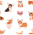 seamless pattern with funny welsh corgi on white vector image
