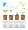 Timeline infographic of planting tree process vector image vector image