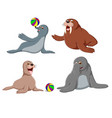 collection of the cute seals vector image vector image
