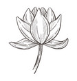 exotic wild flower magnolia plant isolated sketch vector image vector image