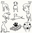 Italian Greyhound vector image