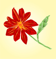Red dahlia polygons summer flower stem vector image