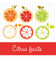 citrus fruits in two different styles contains ora vector image