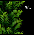 tropical palm leaves seamless pattern border on vector image