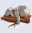 cute sleeping koala in a tree branch vector image vector image