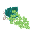 Grapevine background vector image vector image