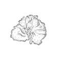 Hand drawn sponge vector image vector image