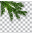 Two realistic green tree branch and its shadow vector image vector image