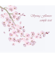 Vintage Cherry flowers background vector image vector image