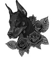 design dobermann dog face with roses vector image vector image