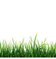 green meadow background vector image
