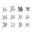 hand drawn sketch of flower symbols vector image vector image