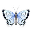 colorful realistic butterfly isolated on white vector image vector image