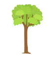tree icon with green leaves and brown trunk vector image vector image