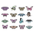 butterflies multicolored and moths big set vector image