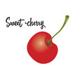 cherry fruit isolated on white background vector image